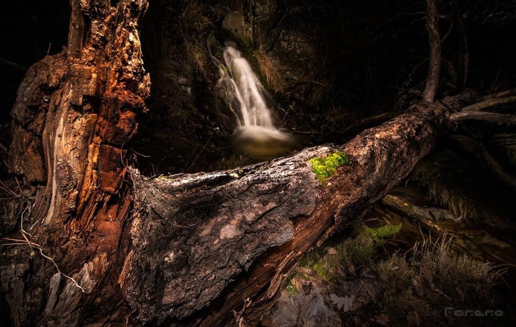 Tronco de árbol muerto y cascada en un bosque por la noche iluminado con linterna