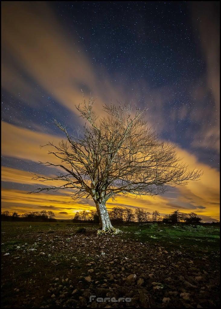 Fotografia nocturna de un arbol solitario